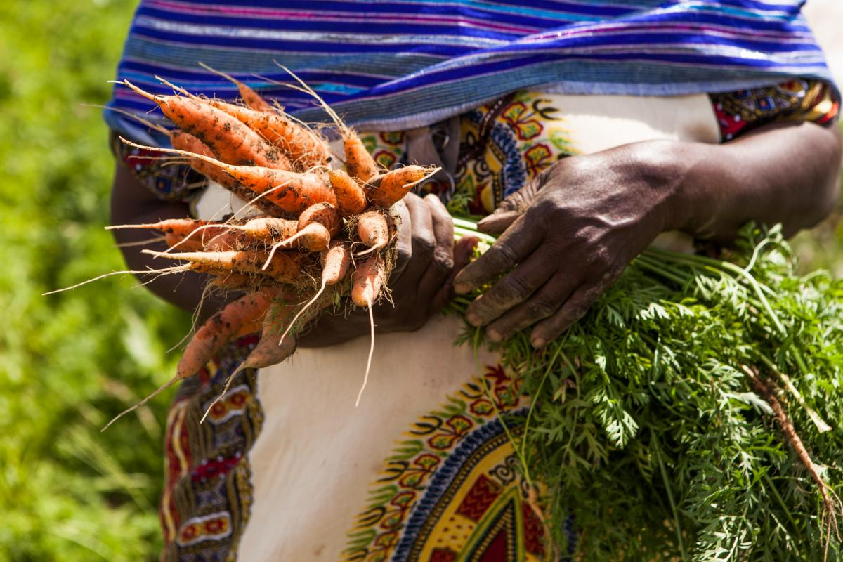 close up of carrots in Seynab Ali's hands
